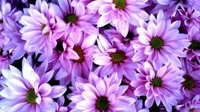 Zonovergoten violette kleuren bloemenachtergrond stock foto's