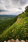 Zonovergoten Weide zoals die van de Berg Georgië wordt bekeken van het Vooruitzicht Stock Afbeelding