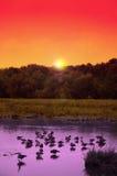 Zonsondergang!! Stock Afbeeldingen