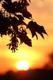 Zonsondergang Royalty-vrije Stock Afbeeldingen