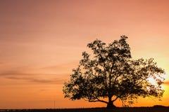 Zonsondergang achter de bomen stock afbeelding