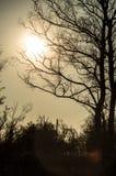 Zonsondergang achter de bomen Royalty-vrije Stock Foto