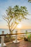 Zonsondergang achter een boom Stock Afbeelding