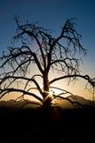 Zonsondergang achter een dode boom stock fotografie