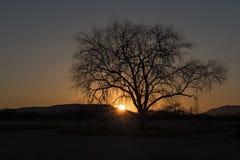 Zonsondergang achter een droge boom in de Erongo-bergen in Namibië Royalty-vrije Stock Afbeelding
