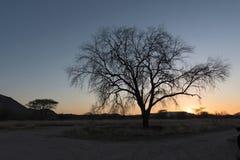 Zonsondergang achter een droge boom in de Erongo-bergen in Namibië Royalty-vrije Stock Afbeeldingen
