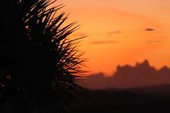 Zonsondergang achter een palm Stock Afbeeldingen