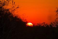 Zonsondergang achter gesilhouetteerde bomen Royalty-vrije Stock Foto