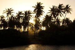 Zonsondergang achter palmen Royalty-vrije Stock Foto