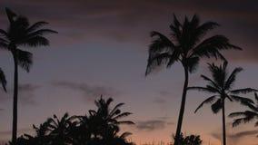 Zonsondergang achter palmen stock footage