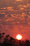 Zonsondergang in Afrika Royalty-vrije Stock Afbeelding