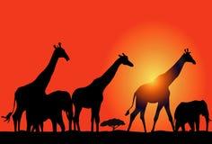 Zonsondergang & Afrikaanse Safari Stock Illustratie
