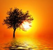 Zonsondergang als fruit Stock Afbeelding