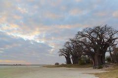 Zonsondergang bij Baines-Baobab stock afbeeldingen