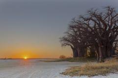 Zonsondergang bij Baines-Baobab ` s royalty-vrije stock afbeeldingen