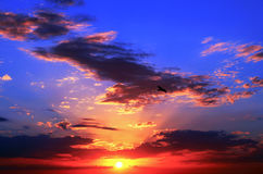 Zonsondergang bij Clearwater-Strand Stock Fotografie