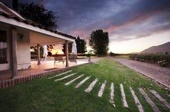 Zonsondergang bij een wijngaard Stock Afbeelding