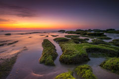 Zonsondergang bij het bemoste strand Royalty-vrije Stock Foto's