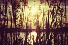 Zonsondergang bij het meer Royalty-vrije Stock Foto's