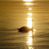 Zonsondergang bij het Meer Royalty-vrije Stock Foto