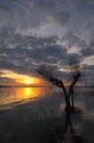 Zonsondergang bij het meer met skeletachtige boom Stock Afbeeldingen