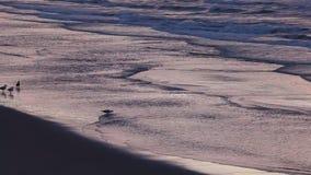 Zonsondergang bij het Noordzeestrand stock video