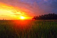 Zonsondergang bij het padieveld van BALI & x28; Darmasaba, Bali, Indonesia& x29; stock afbeelding