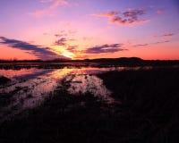 Zonsondergang bij het Wildgebied Royalty-vrije Stock Afbeeldingen