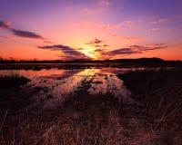 Zonsondergang bij het Wildgebied Stock Foto's