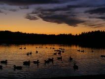 Zonsondergang bij meer Royalty-vrije Stock Afbeeldingen