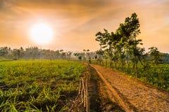 Zonsondergang bijna op Landbouwbedrijfgebied, Indonesië Stock Afbeeldingen