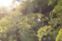 Zonsondergang bloemenachtergrond Royalty-vrije Stock Foto's