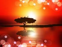 Zonsondergang (boom op het water tegen de het plaatsen zon) Royalty-vrije Stock Afbeeldingen