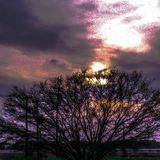 Zonsondergang - Boomvoorgrond Stock Foto's