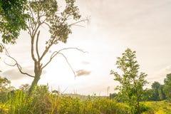 Zonsondergang in bos Stock Afbeelding