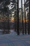 Zonsondergang in bos Royalty-vrije Stock Afbeelding