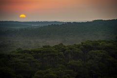 Zonsondergang, Bos van het Duin du Pilat, het grootste zandduin in Europa, Frankrijk stock foto