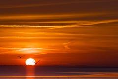 Zonsondergang boven валюшка het, море Wadden на заходе солнца стоковое изображение rf