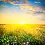 Zonsondergang boven de bloemen Stock Foto
