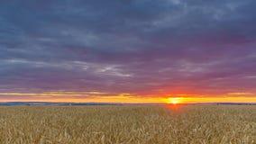 Zonsondergang boven het tarwegebied - 4K tijdtijdspanne stock videobeelden