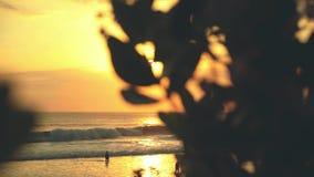 Zonsondergang boven oceaan, mening van het behing van struiken stock footage