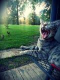 Zonsondergang Cat Farm stock afbeeldingen