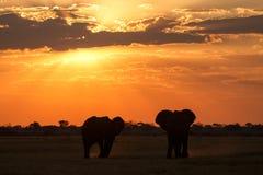 Zonsondergang - Chobe N P Botswana, Afrika royalty-vrije stock afbeelding