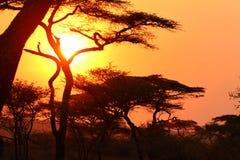 Zonsondergang in de Afrikaanse struik Stock Foto
