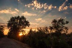 Zonsondergang in de Delta van Donau Royalty-vrije Stock Afbeeldingen