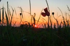 Zonsondergang in de grassen Stock Afbeelding