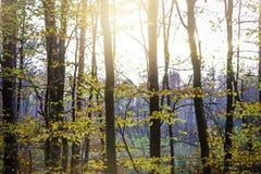 Zonsondergang in de herfstbos Stock Afbeeldingen