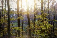 Zonsondergang in de herfstbos Stock Foto's