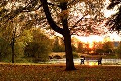 Zonsondergang in de herfstpark Stock Foto's