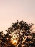 Zonsondergang, de kleur van de avondhemel met de schaduw van een boom met mooi licht, mooi bos, silhouet stock afbeeldingen